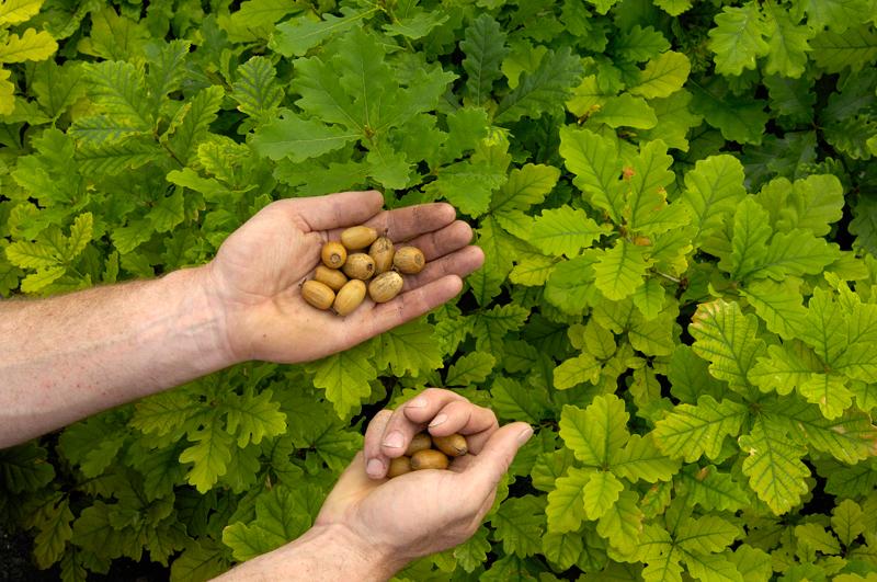 Seeds for nurseries