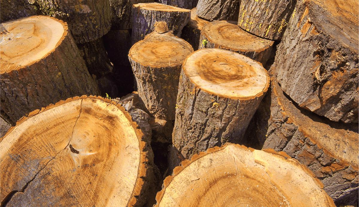 Wood - Coillte
