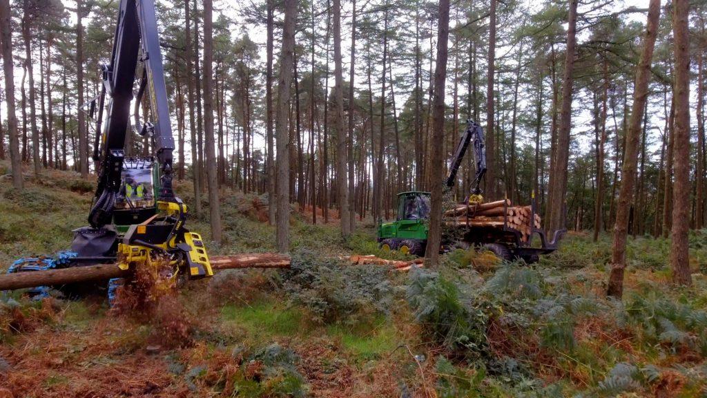 harvesting site