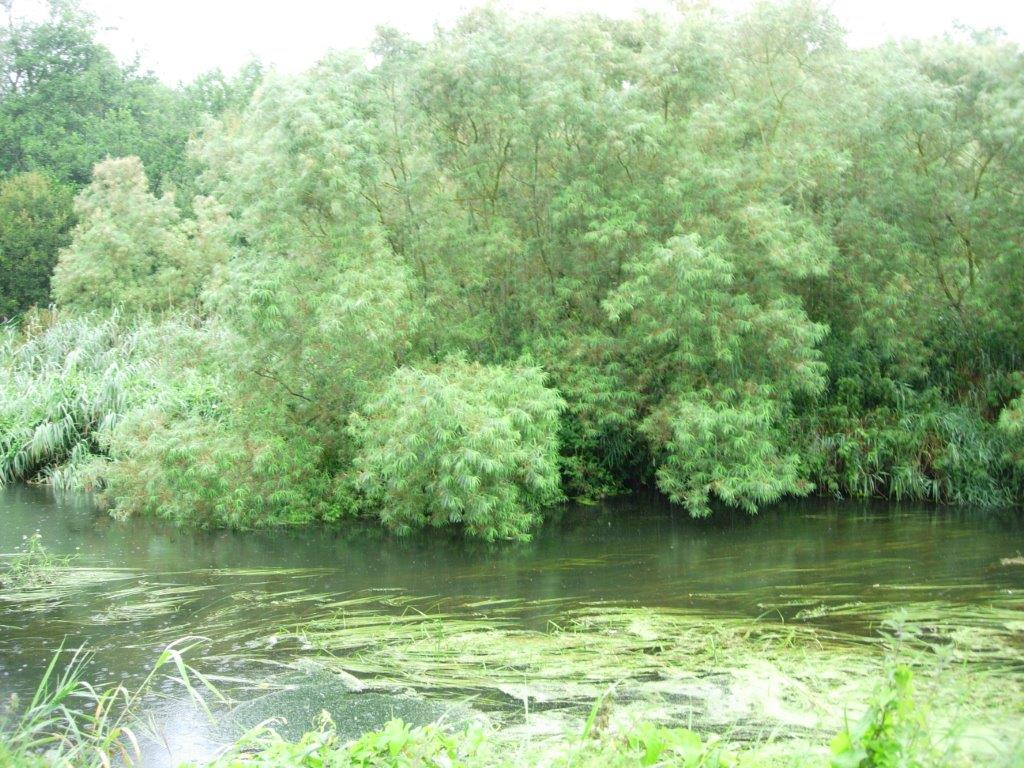 Picture of Native Alluvial Woodland on Coillte estate by riverside