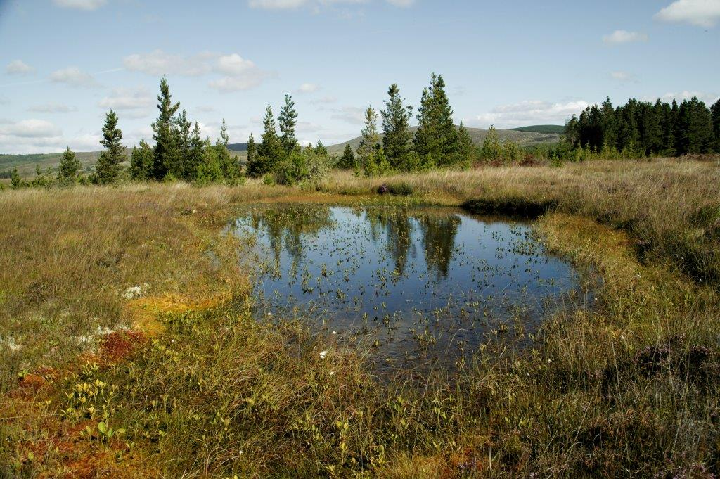Picture of a Blanket bog pool on Coillte estate