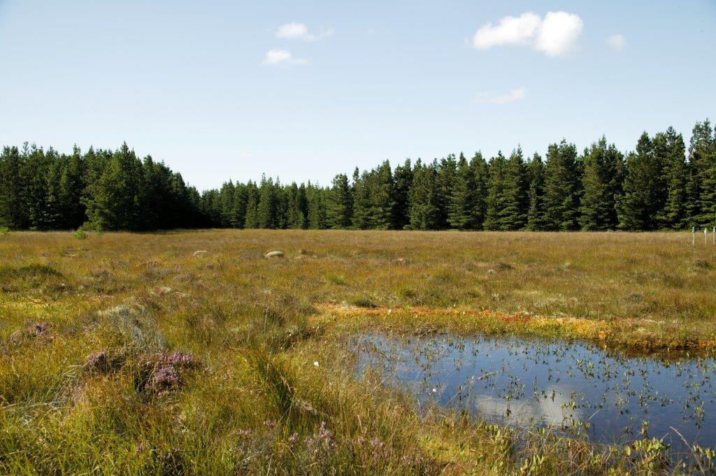 Blanket bog pool on Coillte lands in thre west of Ireland