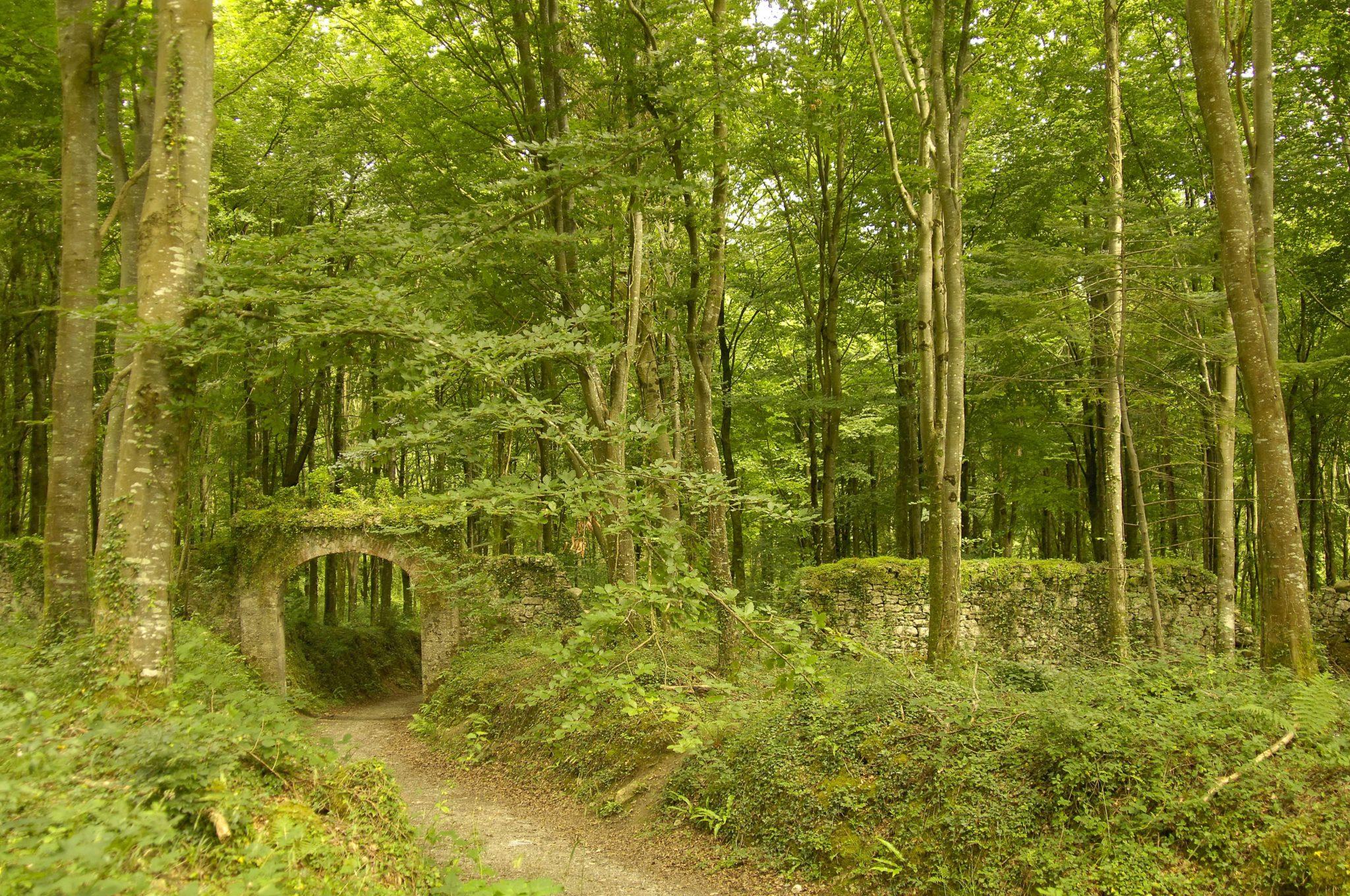Coillte biodiversity forest