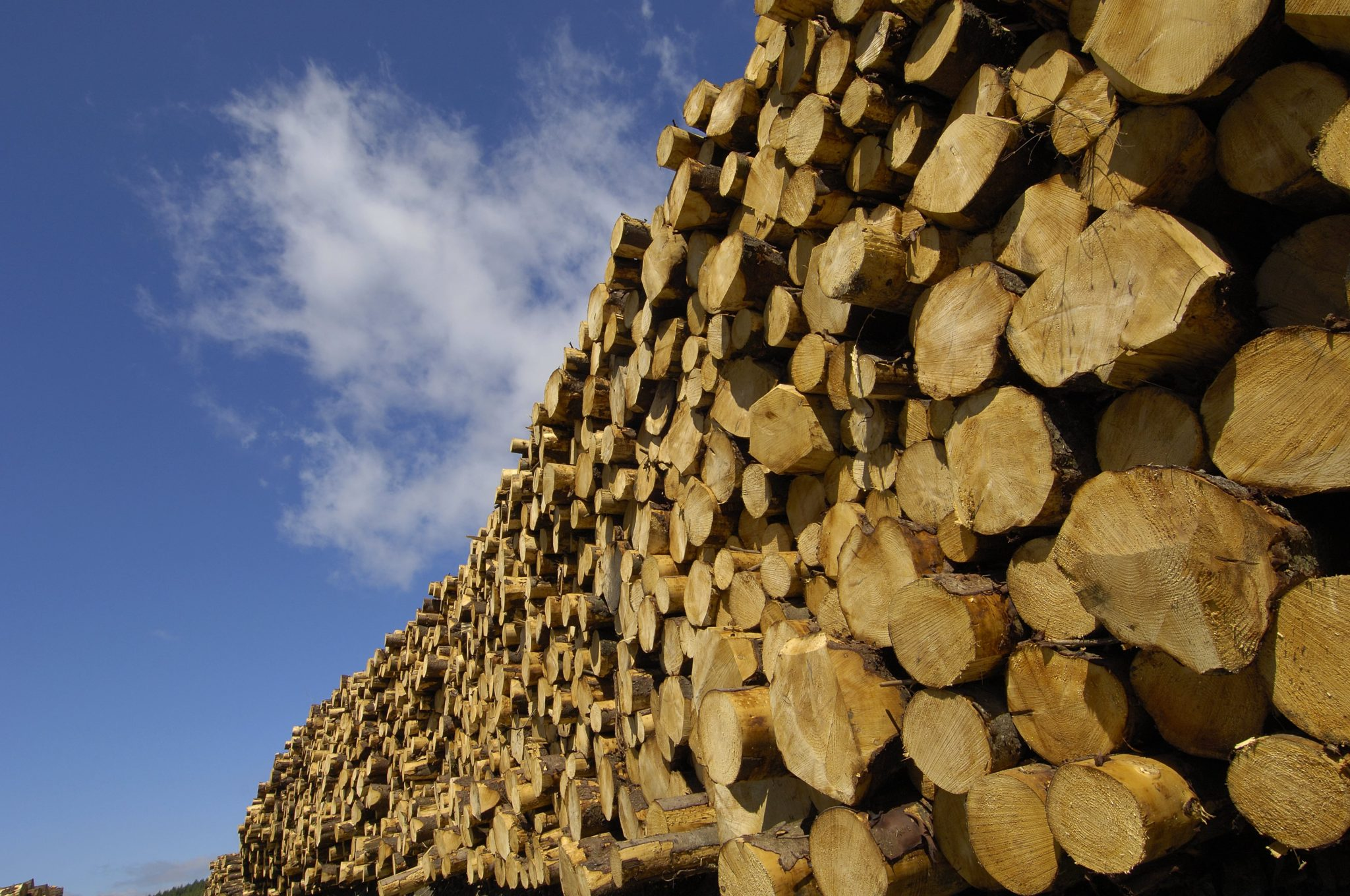 Picture of timber logs stacked