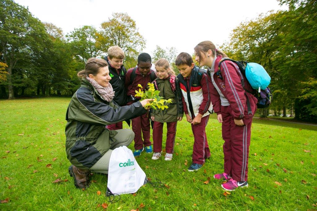 Coillte National Tree Day Event with school kids