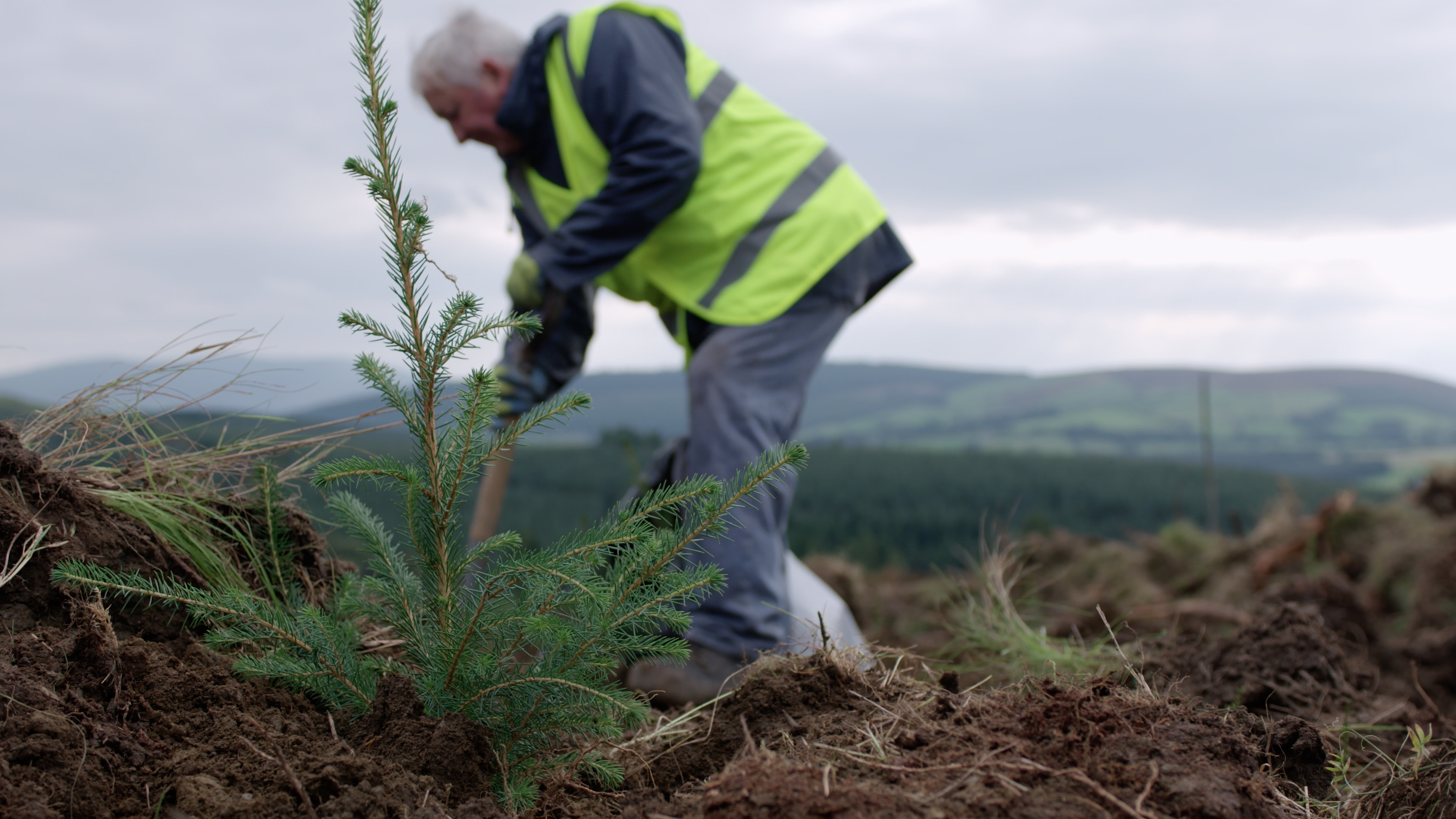Picture of Tree planting in Coillte's Forests