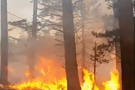 Picture of a forest fire