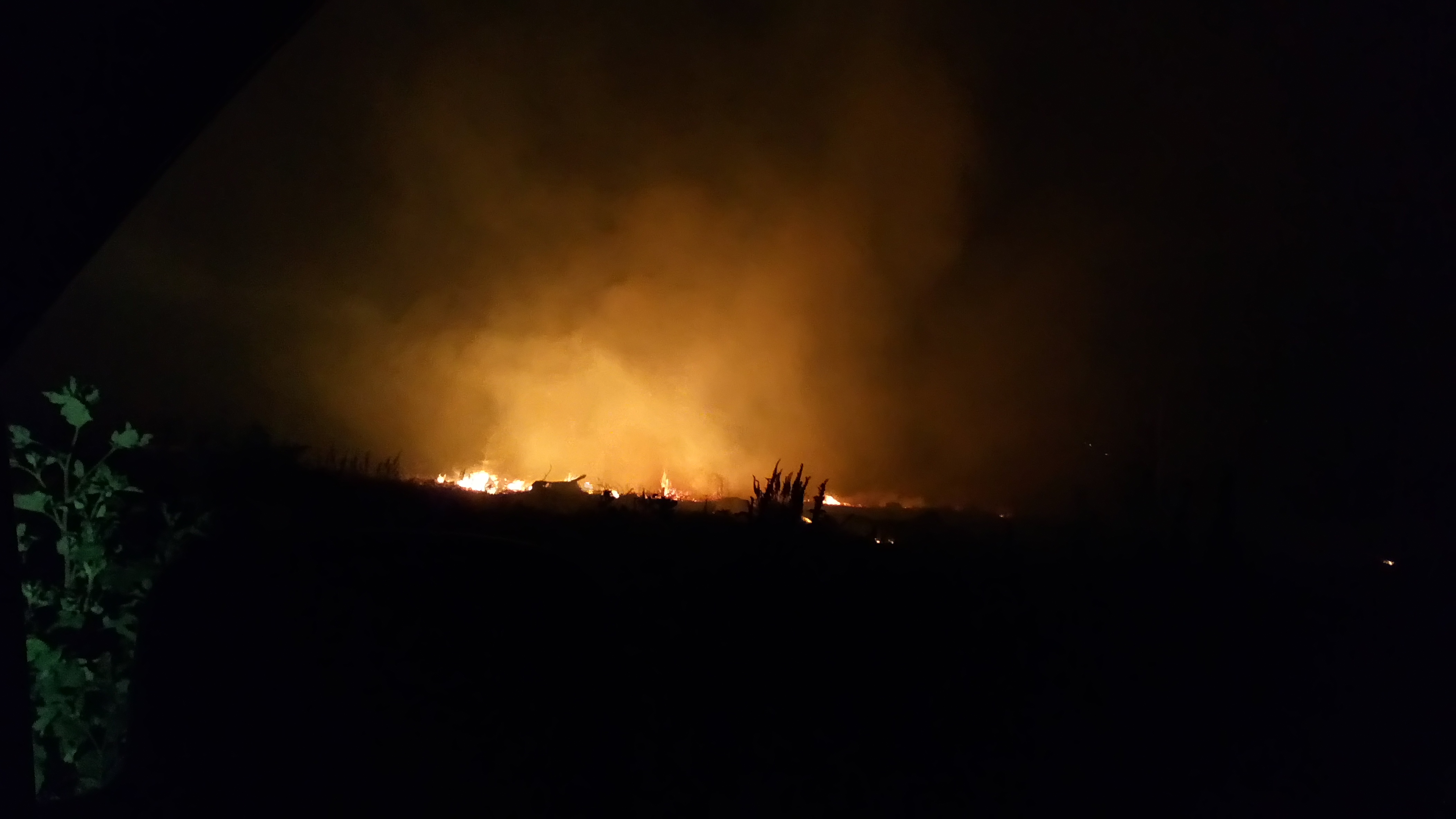 Picture of Forest Fire at Night