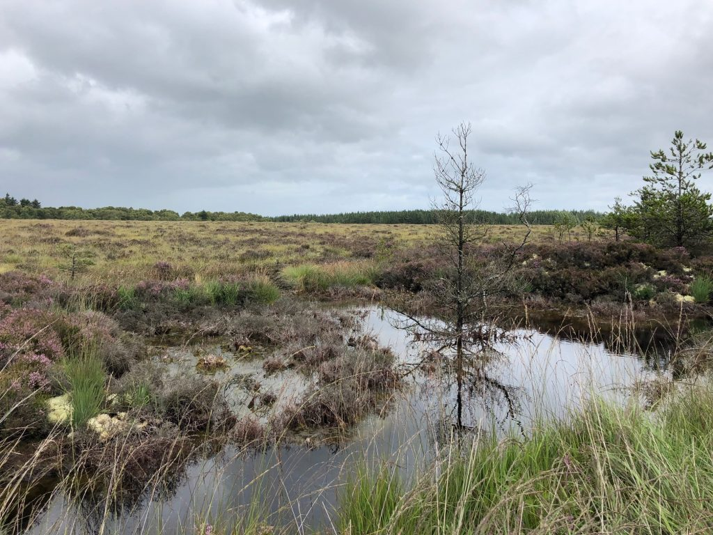 Picture of Pool at Coillte's Aghrane bog