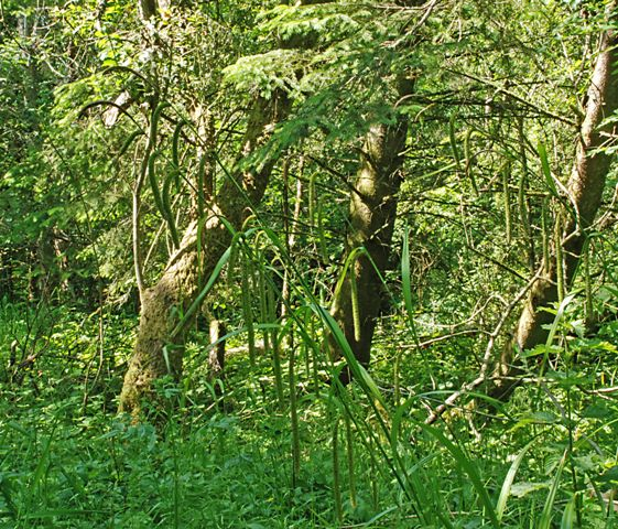 Picture of Coillte's Hazelwood Forest
