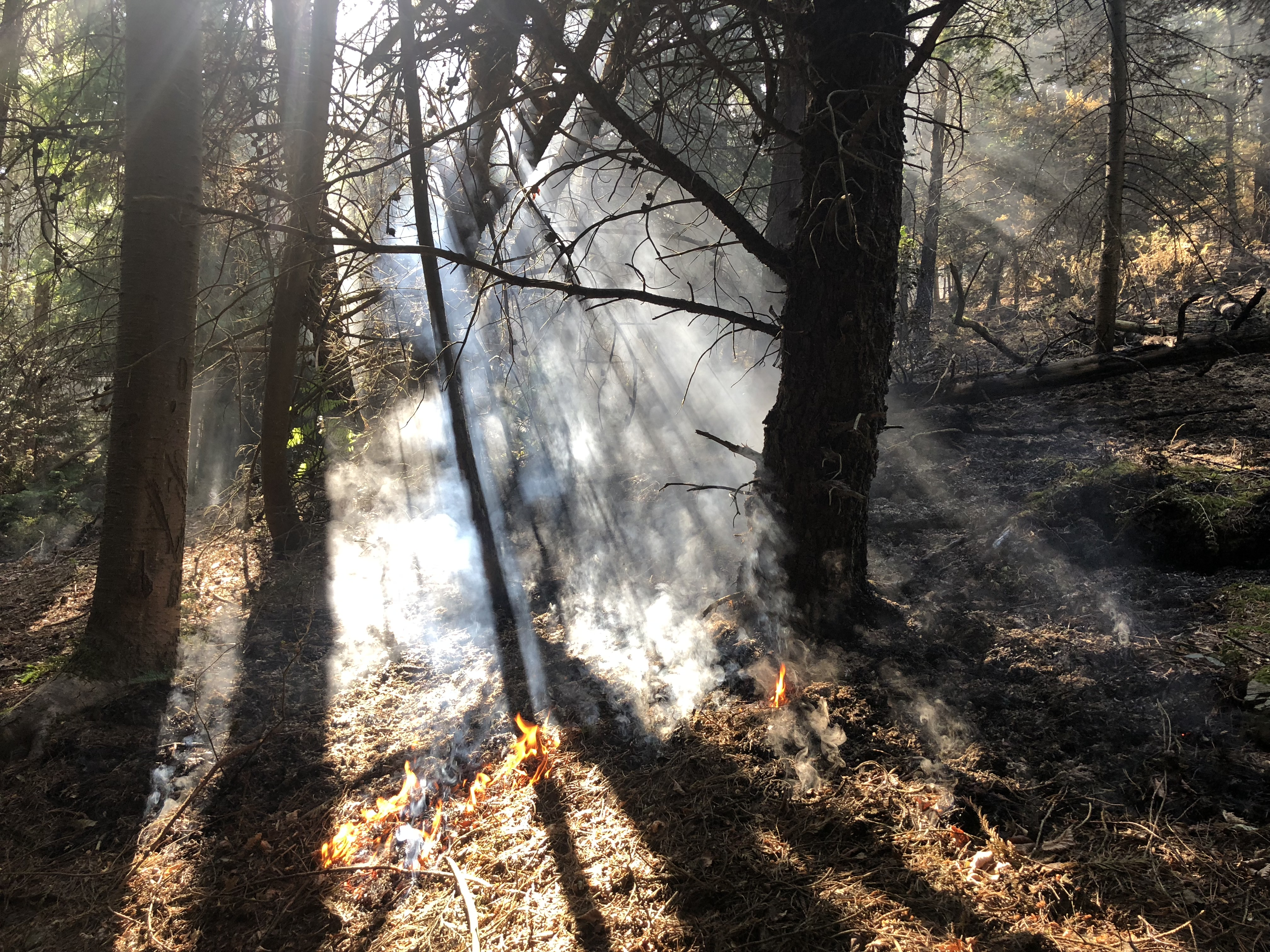 Picture of a fire burning in a forest