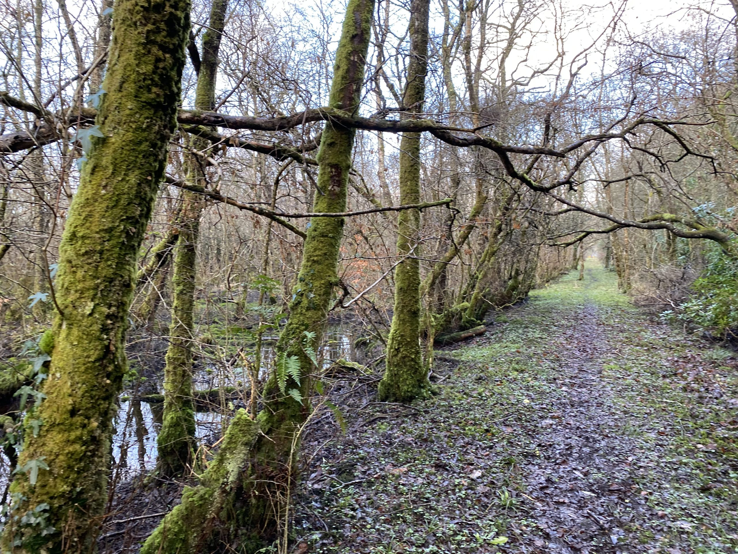 Alluvial woodland in Hazelwood