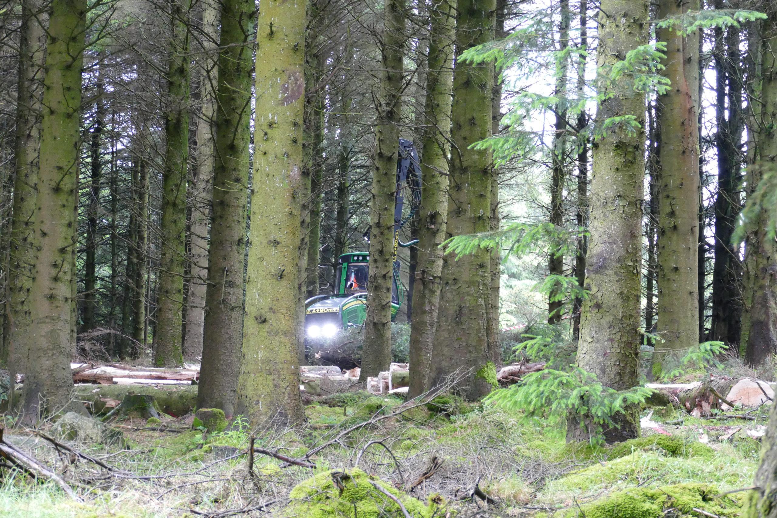 CCF thinning in operation in Ballyedmonduff
