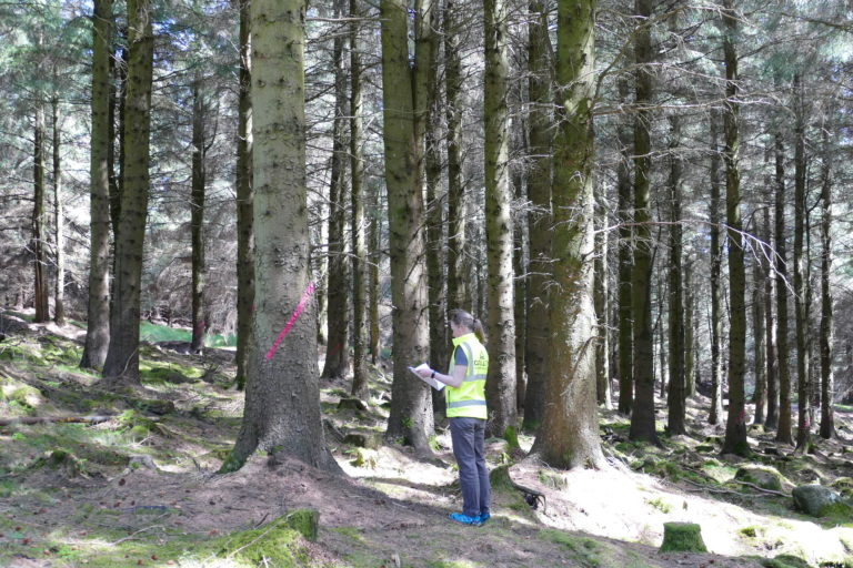Karen Woods inspecting a tree marked for CCF