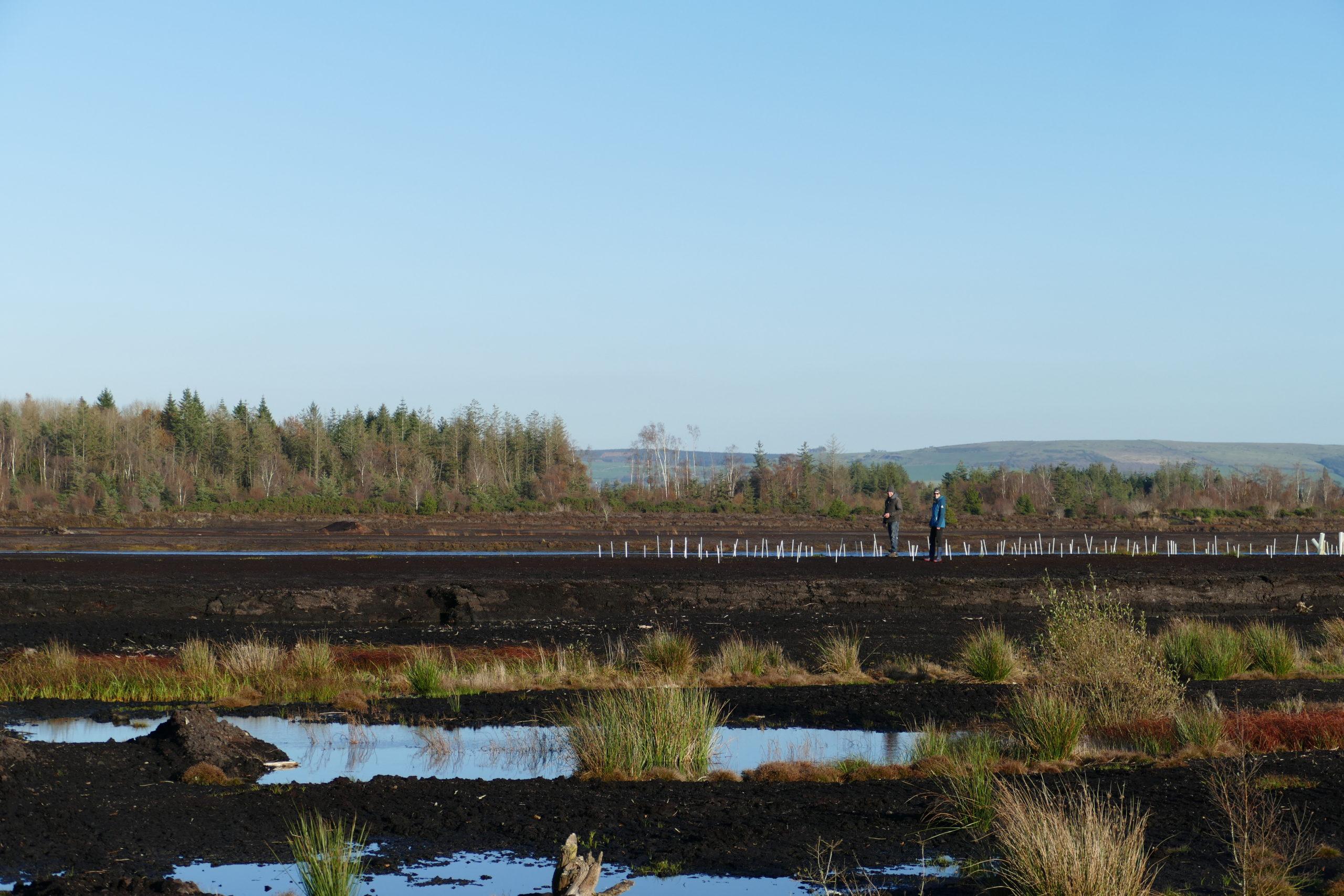 Trial plot on deep peat at Baunmore