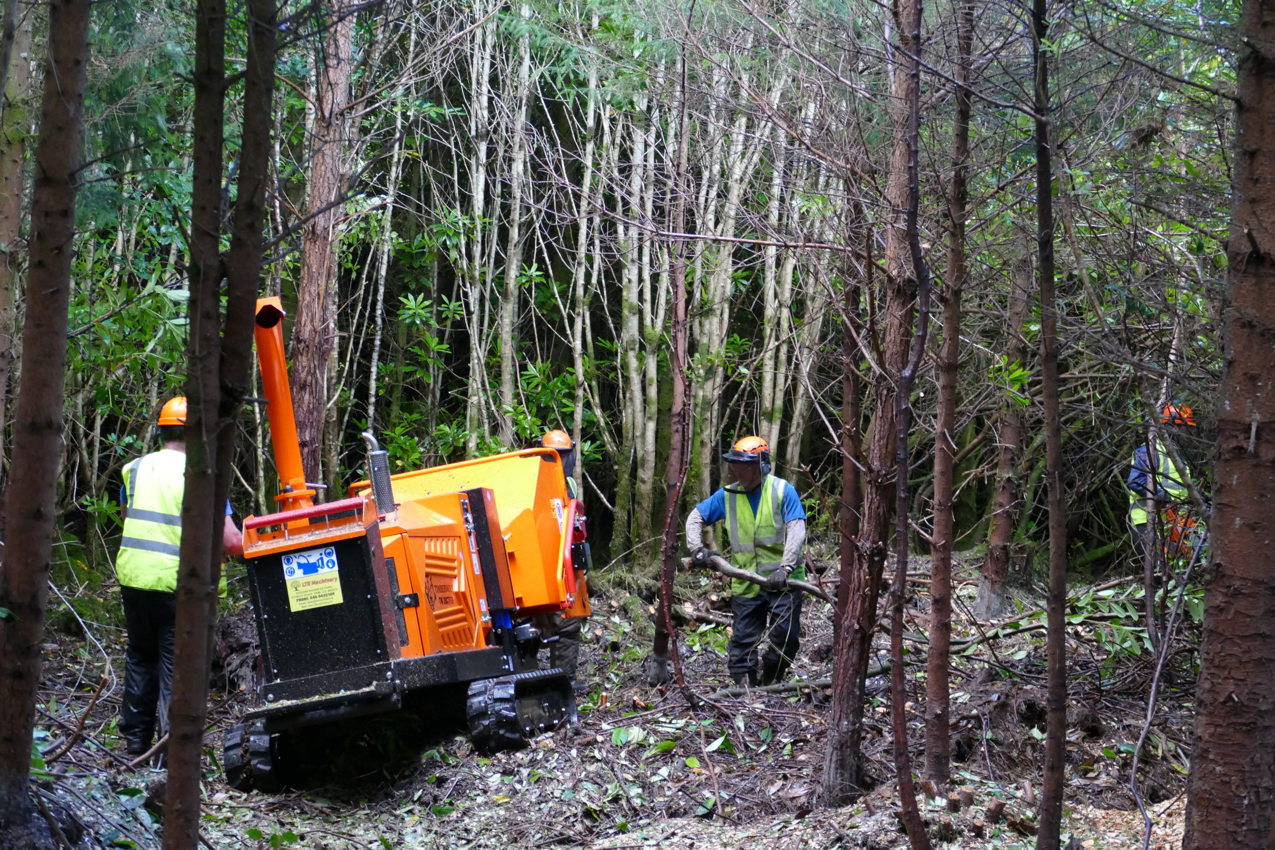 Contractors cutting and chipping the rhododendron