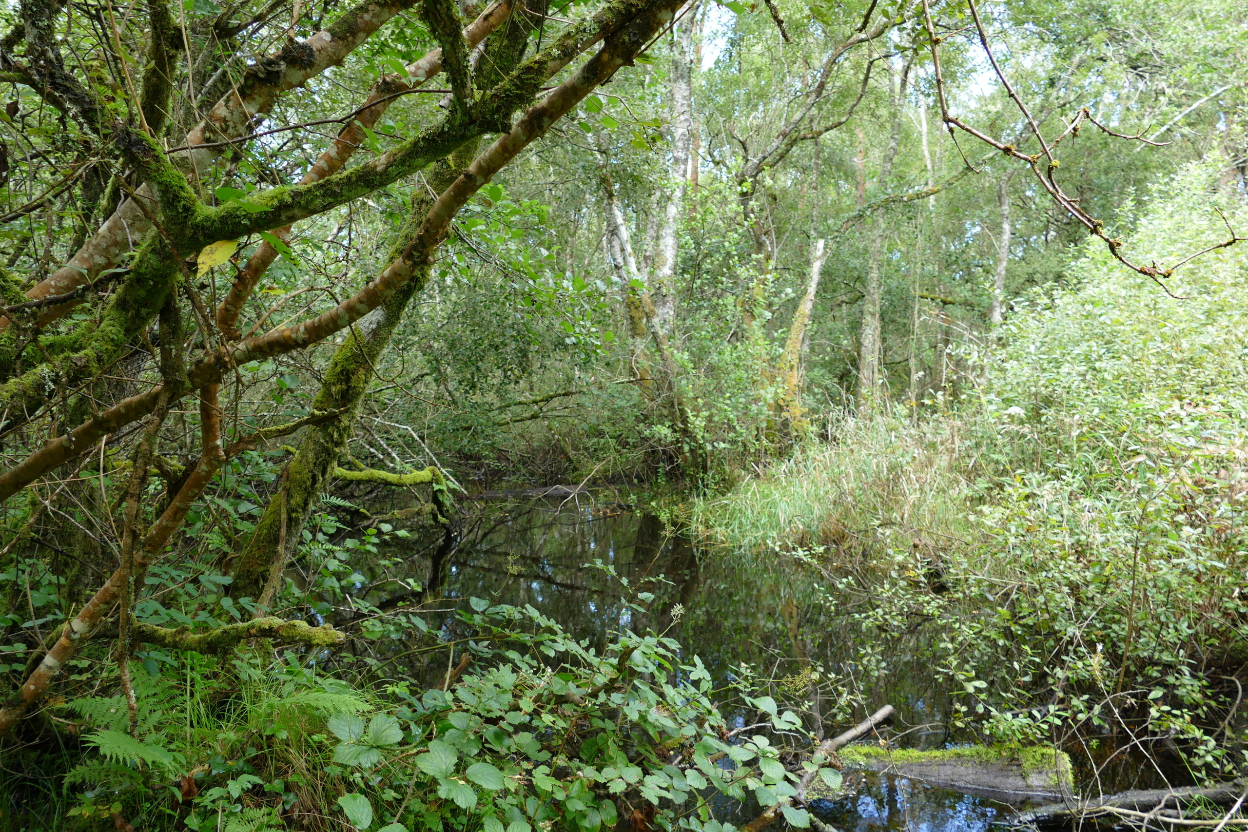 Wet alluvial woodland