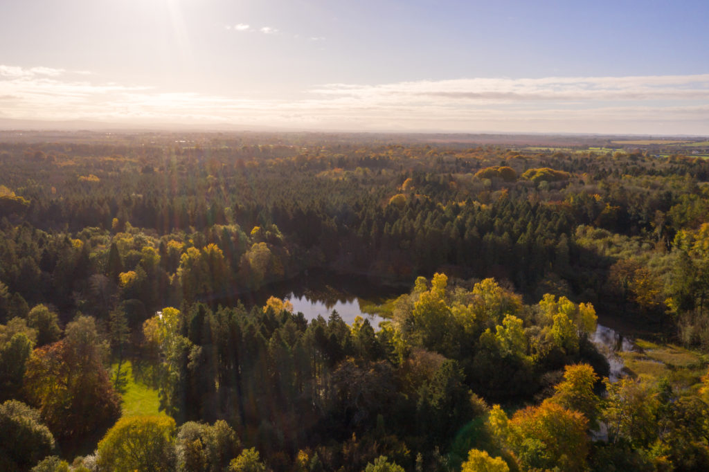 Aerial view of mixed forest at Coillte's Donadea forest park